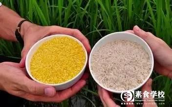 转基因大米,素食,转基因