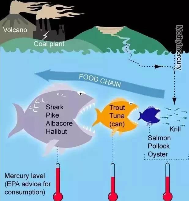 鱼生存环境