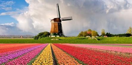 2017年10月30日,荷兰素食文化会组织素食同仁大联欢。