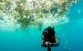 【最新资讯&环保】英男子潜水记录巴厘岛海洋污染 塑料垃圾触目惊心