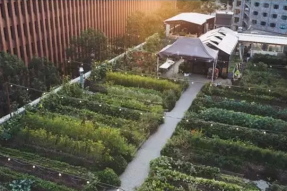 这对CP在屋顶开了个大排档,挤掉世界第一米其林餐厅
