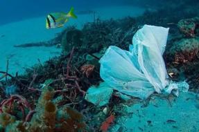 人类粪便中首次发现塑料微粒!我们扔的垃圾,最后还是还给我们了……