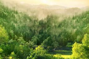 植树节 吃素=植树,为自己身体减负,为地球母亲减负!