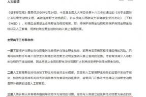 好消息!!深圳将成为中国首个禁止食用狗肉和猫肉的城市!|素食保护动物