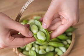 豌豆蛋白开发出了塑料替代品!植物潜力巨大,肉类不是对手啊~