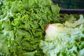 【素食文化】蔬菜最不起眼的根、叶、皮,其实都是养生宝贝!你却把它都扔掉了