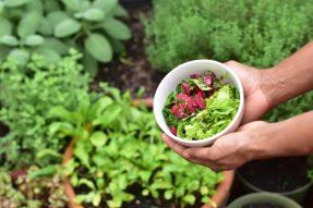 【素食新闻】吃素能延缓肾病?四川这家肾脏病医院,推广素食有成效