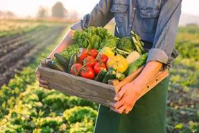【教学回顾】认识素食|真正的素菜应具备这两个条件!